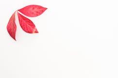 Цвет падения на чистой предпосылке Стоковые Изображения RF