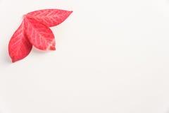 Цвет падения на чистой предпосылке стоковое фото