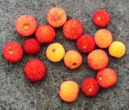 Цвет падения с стручками семени стоковое изображение