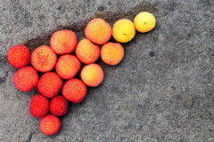 Цвет падения с стручками семени стоковые изображения