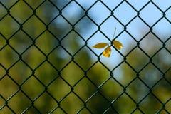 Цвет падения уловленный в загородке стоковые фотографии rf