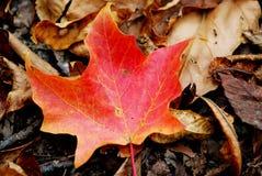 Цвет падения Стоковое Изображение RF