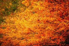 Цвет падения Стоковые Фотографии RF