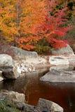Цвет падения Стоковое фото RF
