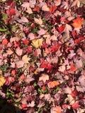 Цвет падения Стоковая Фотография