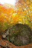 Цвет падения Стоковая Фотография RF