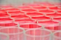 Цвет питья Стоковые Фотографии RF