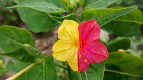 Цвет поединка стоковые фото