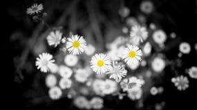 Цвет помостов селективный Стоковая Фотография