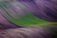 Цвет полей Стоковые Изображения