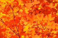 цвет предпосылки осени Стоковое Изображение RF