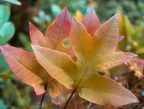Цвет природы мы все знаем свой падение стоковые фото