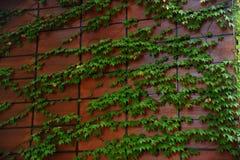 Цвет природы Стоковая Фотография