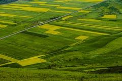 Цвет сельскохозяйствення угодье Стоковое Изображение