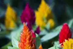 Цвет цветка стоковое изображение