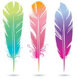 Цвет яркий Стоковые Фото