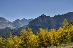 Цвет Aspen падения Стоковое фото RF