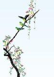 цвет cketch springy Стоковое Изображение