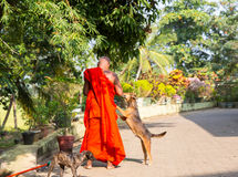 Цейлон, буддийские подавая собаки в виске Будды стоковая фотография