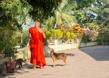 Цейлон, буддийские подавая собаки в виске Будды стоковая фотография rf