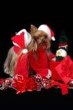 целовать собак рождества Стоковые Фотографии RF