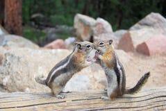 целовать Стоковое Фото