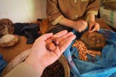 Целый высушило плодоовощ argan стоковое фото