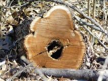 Целый в центре пня дерева стоковые фотографии rf