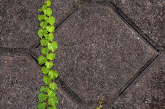 Цемент конструирует предпосылку Стоковое Фото