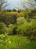центральная весна России Стоковое фото RF