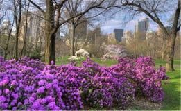 центральная весна parl Стоковое Изображение RF