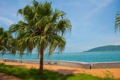 Центральная прогулка с пальмами морем Kota Kinabalu, Сабах, Малайзия стоковая фотография