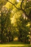 центральный парк nyc Стоковое Изображение