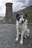 Центральная азиатская собака чабана на предохранителе против Svan возвышается, Ushguli Стоковая Фотография RF