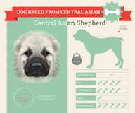 Центральное азиатское infographics породы собаки чабана иллюстрация вектора