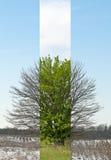 Центральное положение дерева зимы и весеннего времени Стоковое Изображение RF