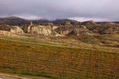 Центральный виноградник Otago Стоковое Изображение RF