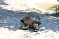 Центральный зоопарк FL в Sanford Fl Стоковые Изображения