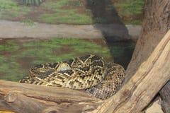 Центральный зоопарк FL в Sanford Fl Стоковая Фотография
