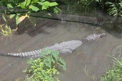Центральный зоопарк FL в Sanford Fl Стоковое Изображение RF