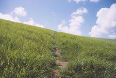 Центральный путь сделанный через angled горный склон травы Стоковые Фотографии RF