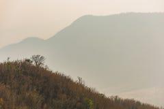 Центральный район горы Таиланда во время лета селективно Стоковые Изображения
