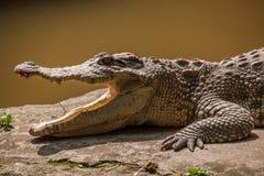 Центр бассейна крокодила крокодила Чунцина Стоковые Фотографии RF