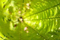 Центр или сердце свежего куста папоротника против предпосылки голубые облака field wispy неба природы зеленого цвета травы белое  Стоковая Фотография RF