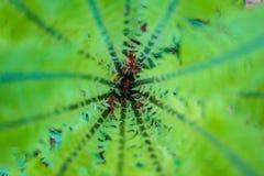 Центр или сердце свежего куста папоротника против предпосылки голубые облака field wispy неба природы зеленого цвета травы белое  Стоковые Изображения RF