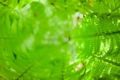 Центр или сердце свежего куста папоротника против предпосылки голубые облака field wispy неба природы зеленого цвета травы белое  Стоковое Фото