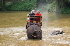 Центр консервации слона Таиланда - ванна слона ванны слона деятельности естественно стоковые фото