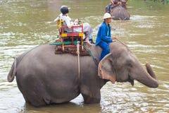 Центр консервации слона Таиланда - ванна слона ванны слона деятельности естественно стоковое фото