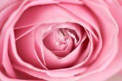 Центр крупного плана мягко розы пинка Стоковое фото RF