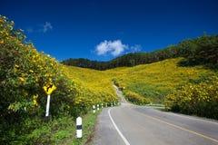 Центр дороги желтого поля мексиканского солнцецвета Стоковое Изображение RF